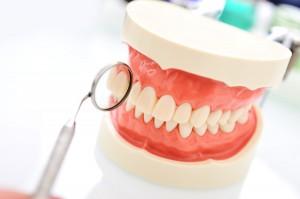 Model lidských čelistí. stomatologie, laboratoř, Hodonín